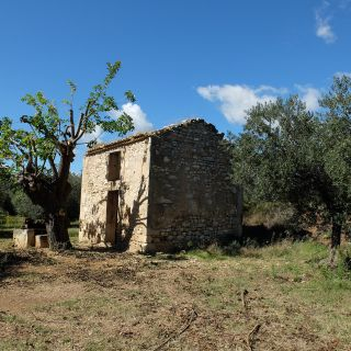 Grove of Les Baux and its cabanon